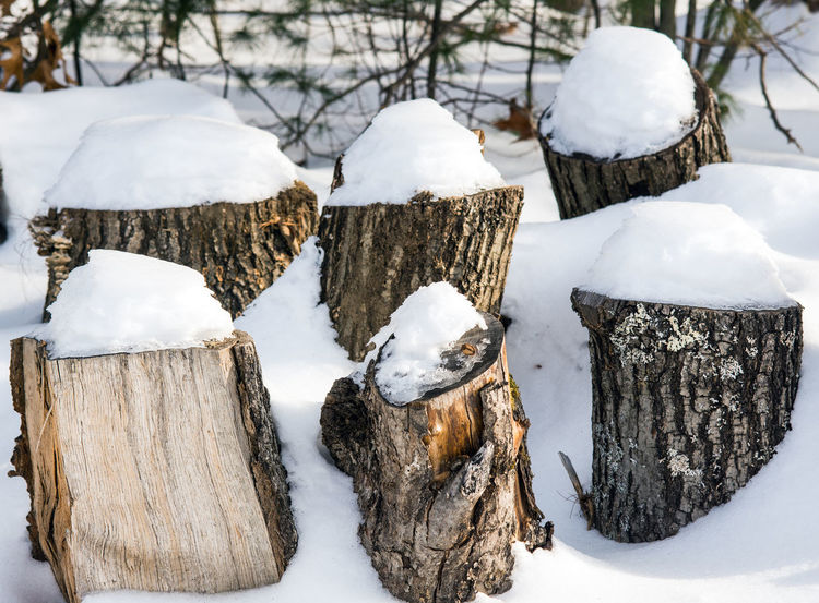Snow-capped logs... Winter Wood Beauty In Nature Close Up Cold Cold Temperature Day Frozen Logs Nature Outdoors Snow Weather White