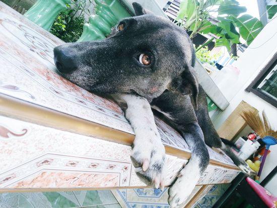 Problem??? Dog Pet Pet3 BlackDog See