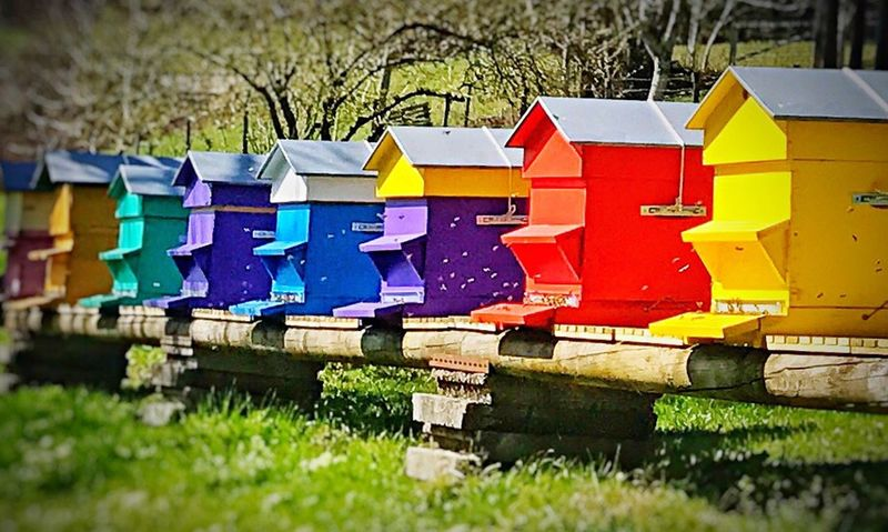 Beehives Multi Colored Grass Outdoors No People Day Nature Bees Insect Beehive Farm Agriculture Colour Colour Of Life Nature