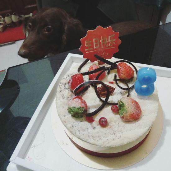 Love u! Happy Birthday! Doggie I Love My Dog Dachshundlove Doglover Cute Pets Dachshund Dog❤ Dog Lover Sausagedog Dogs Of EyeEm Dog Love Pets Dog Animal Themes