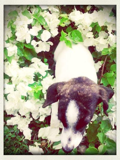 Flowers Pet Dog  Love Animals
