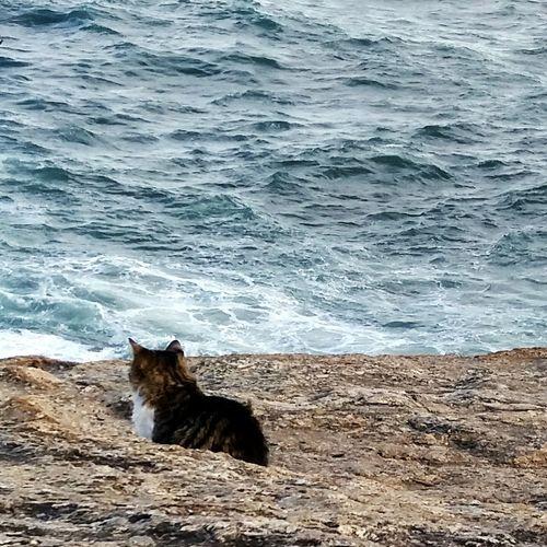 One Animal Animal Themes Cat Sea Water Nature Day Outdoors No People Beach Wave Pedra Do Arpoador Rio De Janeiro Rio De Janeiro Eyeem Fotos Collection⛵