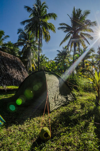 Camping in the tropical wilderness Camping EyeEm Best Shots EyeEm Nature Lover EyeEmNewHere Nature Philippines Travel Beauty In Nature Coconut Palm Tree Coconut Trees Green Color Mode Of Transportation Outdoors Palm Leaf Plant Sunlight Sunrise Sunset Tent Transportation Travel Destinations Tree Tropical Climate Water Wheel Going Remote The Traveler - 2018 EyeEm Awards