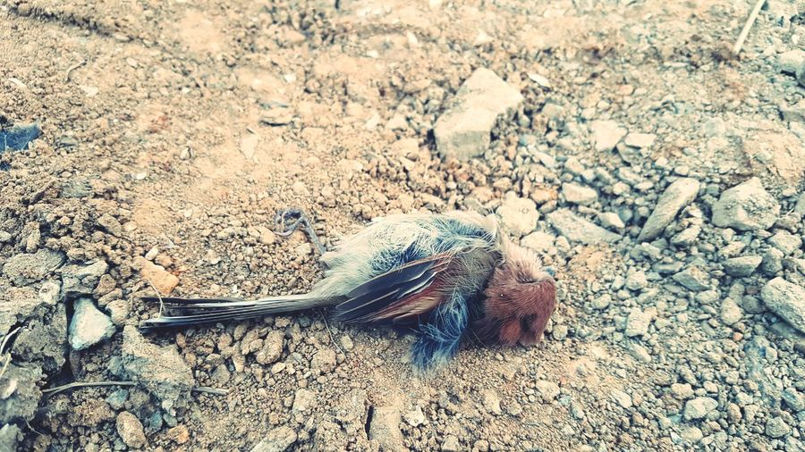 Bird Death Lonelyness Sorrowful Small Little High Angle View Close-up Animal Themes