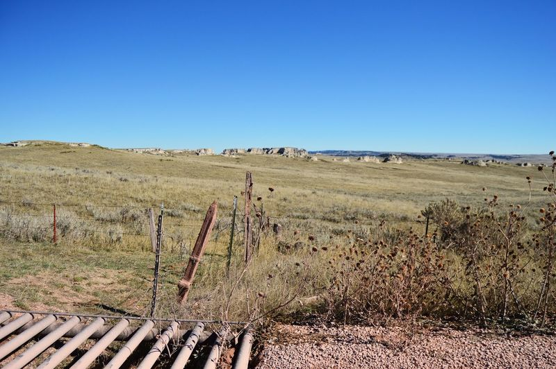 Red gravel dust everywhere Country Side In The Distance. Barbed Wire Shadows Wooden Post Dead Sunflowers West Of Lusk Wyoming Outdoors Sunshine Auto Gate Clear Sky Rural Scene Blue Sunny Landscape Grass