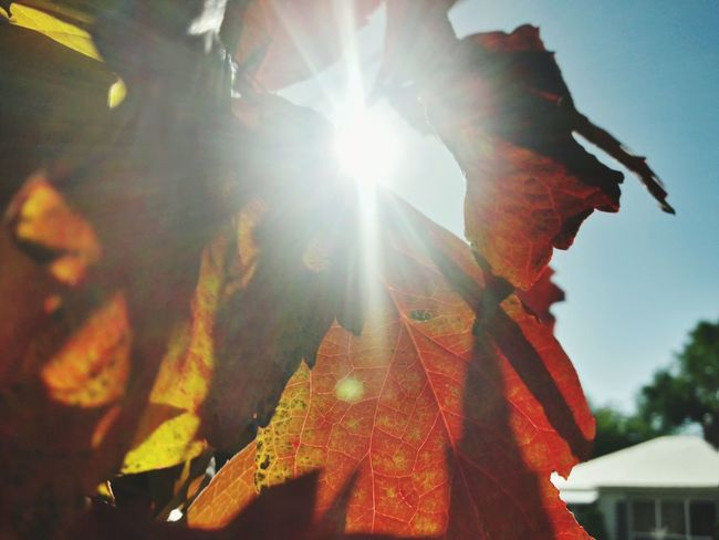 Lens Flare Sunbeam Sun Sunlight Day Outdoors No People Nature Close-up Sky