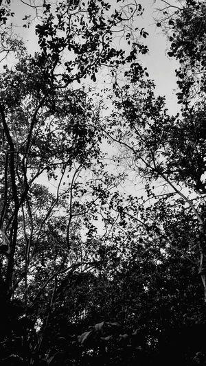 Fotografia Preto E Branco Monochromatic Monochrome Blackandwhite Black And White Sky EyeEm Nature Lover Potography Forest Park Brasil ♥