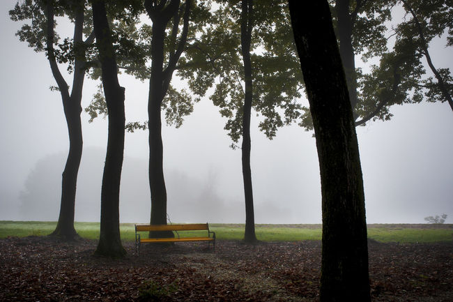 Foggy Weather Absence Bench Day Environment Field Fog Foggy Foggy Day Foggy Morning Grass Land Landscape Nature No People Outdoors Park Park Bench Plant Seat Tranquil Scene Tranquility Tree Tree Trunk Trunk