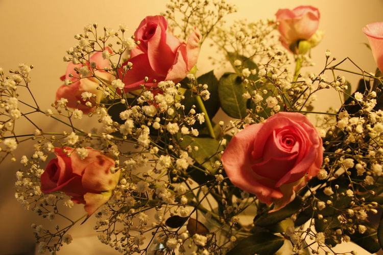 Pink roses with