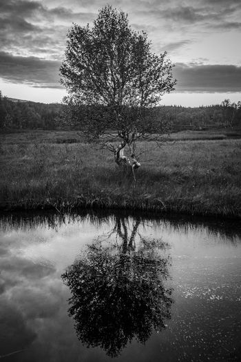 Treeseert Tree Plant Water Sky Beauty In Nature Tranquility Reflection Nature Lake Cloud - Sky Tranquil Scene Scenics - Nature Non-urban Scene Land Day Field Waterfront Landscape One Person Outdoors Tree Reflection Fine Art Photography