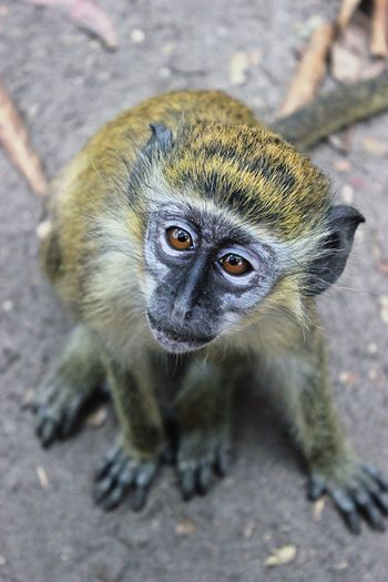 EyeEmNewHere Cute Animal Wildlife One Animal Animals In The Wild Vertebrate Portrait Mammal No People Close-up Primate Young Animal Nature Animal Eye Small