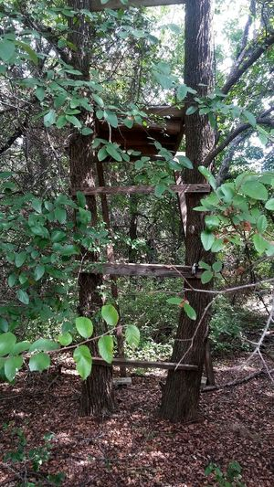 Treestand Green Color Leaf Growth Tree Nature Outdoors Growing Overgrown deer blind