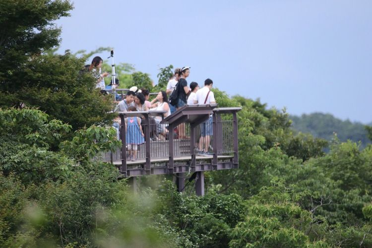 Tree Outdoors Day Medium Group Of People Real People Nature Clear Sky Men Women Sky People Wood View Tourists