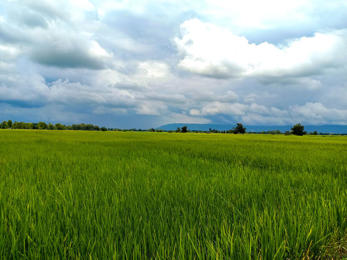 Rain clouds Countryside Country Life Country Countrylife Cloud - Sky Clouds & Sky Clouds Sky Sky And Clouds Sky_collection Sky Only Skyblue Field Fields And Sky Farm Rice Paddy Rice Field Ricefield Ricefield View Tree Rural Scene Cereal Plant Agriculture Field Crop  Farm Sky Landscape Cloud - Sky