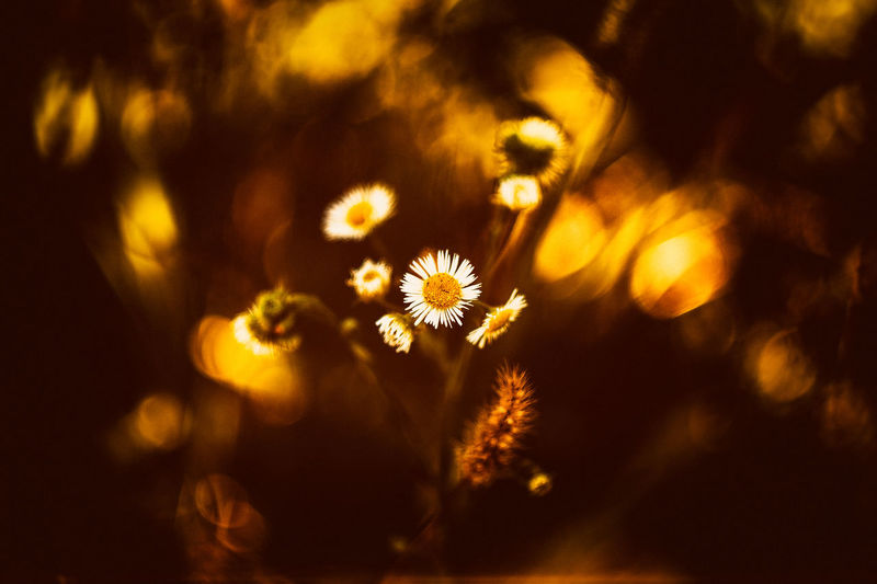 20160901 - Summer Beauty In Nature Botany Close Up Close-up Flower Flowers Nature Plant Still Life