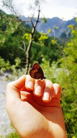 Butterfly & Naturelover