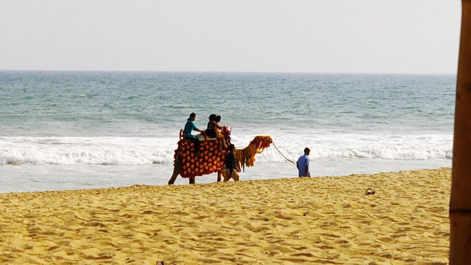 Camel Ride On The Beach Puri Puri Beach Indian Heritage Heritage Site Pets Serenity Couple Beach Sand Sea Vacations Horizon Over Water Travel Destinations Wave Women Togetherness Lifestyles People Nature Beauty In Nature Domestic Animals Day Outdoors Sky Men Water
