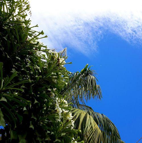 Tree Flowerwhite Skyandclouds  Litllemoon Goodmorning :)