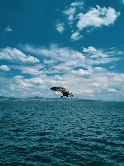 View of bird teying to catch his food in sea against sky and the sea