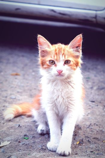 Rethink Things Domestic Cat Pets Animal Eye Feline Cute Animal Hair Portrait Mammal Sitting One Animal No People Domestic Animals Beauty Ear Animal Themes Kitten Outdoors Day