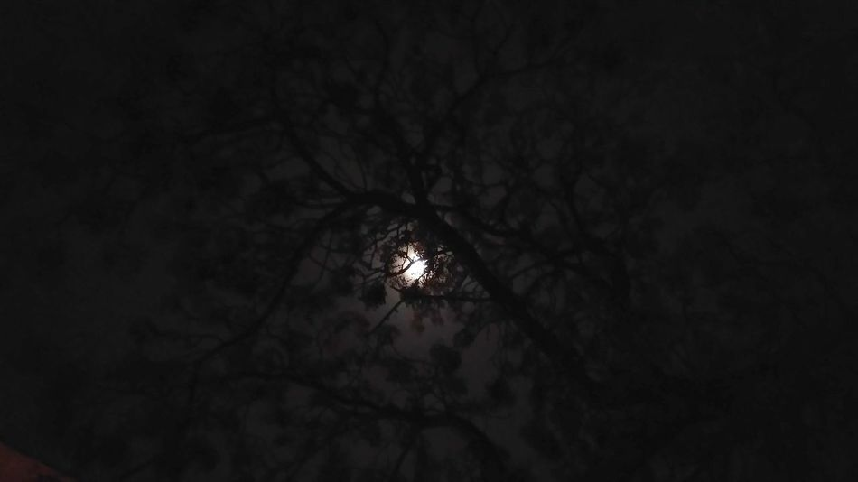 Dark Night Silhouette Illuminated Indoors  No People Nature Moon Tree Sky HUAWEI Photo Award: After Dark
