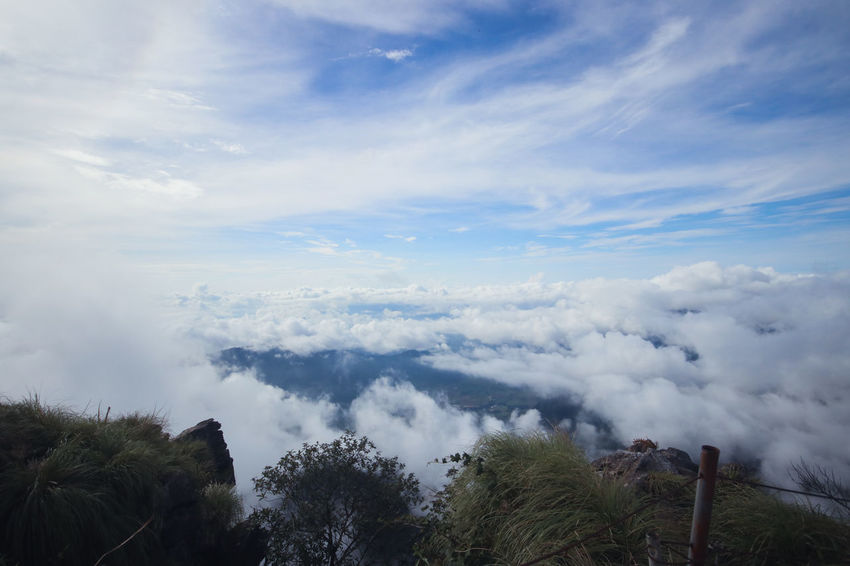 Chiang Rai Chiang Rai, Thailand Sun Rise Beauty In Nature Cloud - Sky Day Environment Growth Idyllic Land Low Angle View Mist Mountain Nature No People Non-urban Scene Outdoors Phucheefah Plant Pollution Scenics - Nature Sea Of Mist Sky Tranquil Scene Tranquility Tree