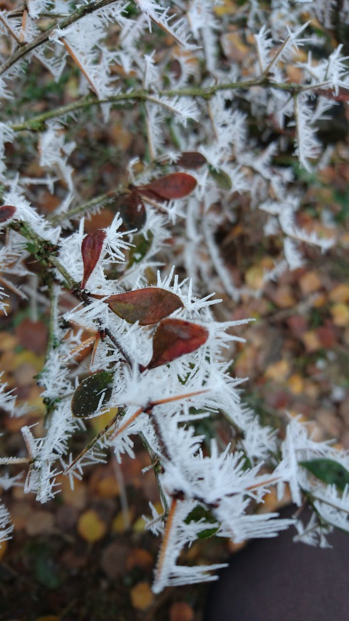 cold temperature, winter, snow, nature, frozen, weather, leaf, beauty in nature, autumn, close-up, outdoors, focus on foreground, day, growth, white color, ice, no people, fragility, plant, frost, tree, branch, ice crystal, freshness