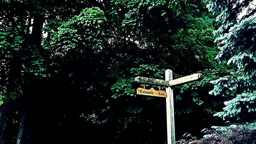 Summer Michigan Pure Michigan Outdoors Green On The Way Trees Sign Sign Post Signpost Sign Post In The Woods Fine Art Photography Showcase July