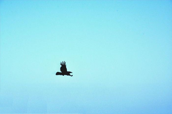 Fliying Birds Freedom Skys Blue Sky Haveniceday Exploring Hello World Amazing Summer Love ♥ Enjoying Life Photography Canary Islands Colour Of Life