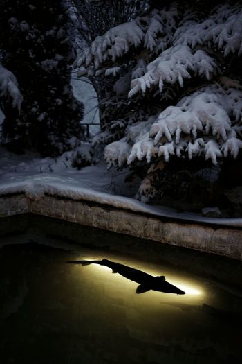 Pond Fish Snow Snow Covered Snow Covered Trees Dark No People Water Illuminated Full Length Silhouette Winter Cold Cold Temperature Season  Covering Snowcapped