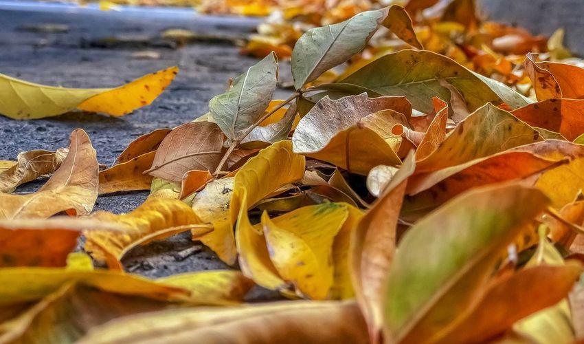 Leaves 🍁
