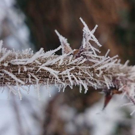 Tel Winter Winterwonderland Winternature Természet Természetfoto Naturephotography Nature Naturephotograph Naturephoto Naturephotos Nofilter Nofilterneeded Koponyeg Macro Beauty