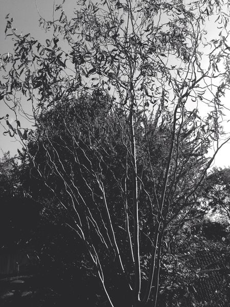 Fall Backyard Trees Hello World