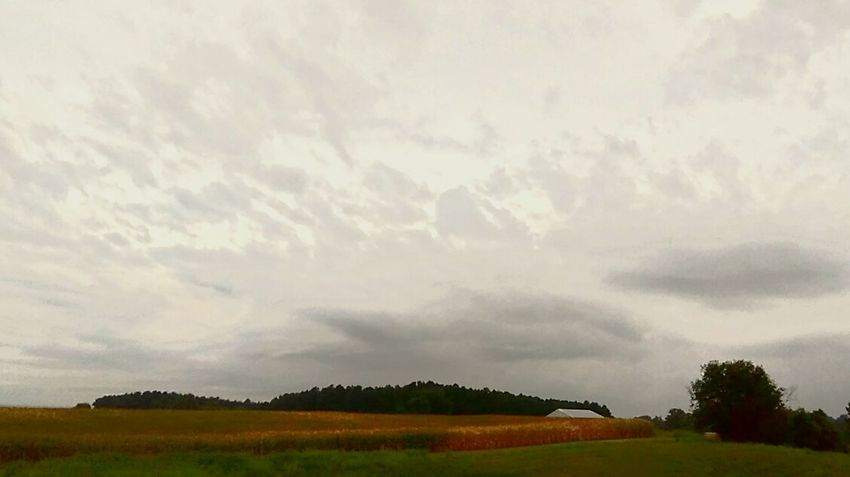 Cloud - Sky Tree Landscape Field Beauty In Nature Day No People Outdoors Grass Nature Sky