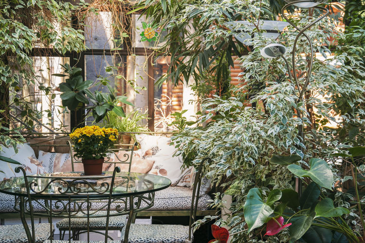 Potted plants on table against trees