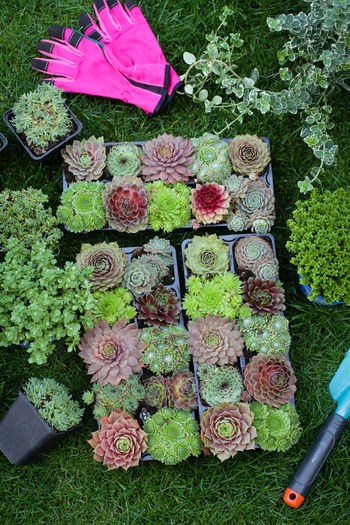 High angle view of multi colored potted plants in yard