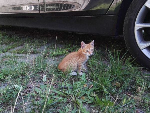 Cat Under The Car Cute Cat Cat Pets Nofilter Car Original Photo