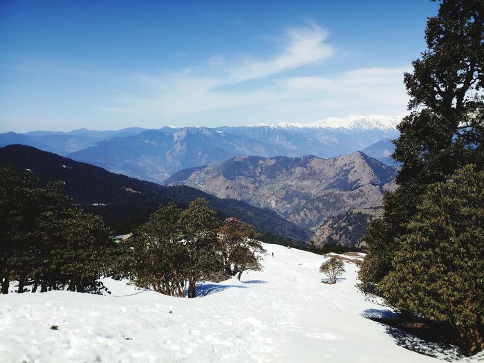 snow mountain Tree Mountain Snow Cold Temperature Winter Pine Tree Pinaceae Ski Holiday WoodLand Forest Ski Lift Snowboarding Powder Snow Valley Mountain Ridge
