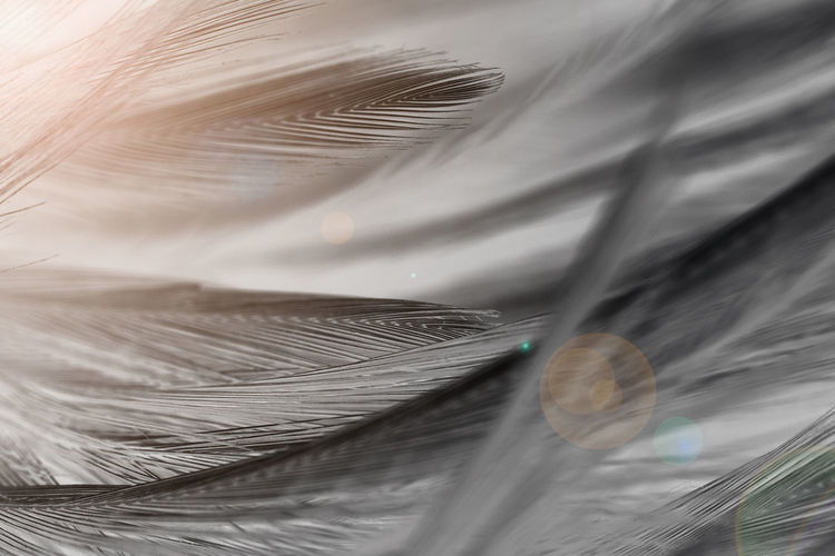 Feather  Close-up No People Vulnerability  Full Frame Fragility Lightweight Selective Focus Softness Day White Color Backgrounds Outdoors Still Life High Angle View Nature Pattern Motion Growth Plastic Bag