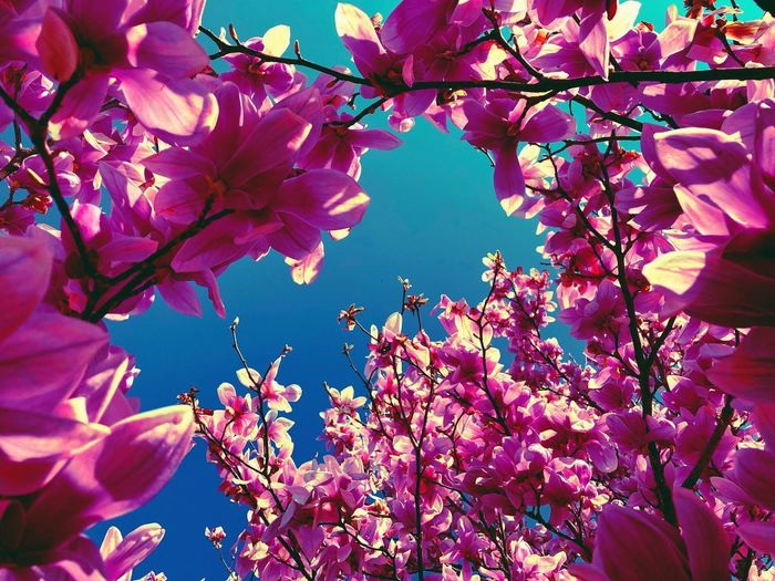 Our spring garden. Plant Flowering Plant Flower Fragility Beauty In Nature Growth Pink Color Freshness Low Angle View Branch Springtime Nature Day Close-up Tree Sky