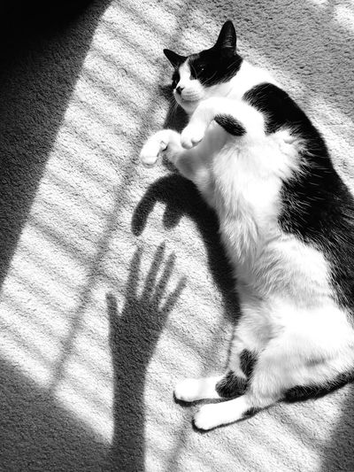 High angle view of cat sitting on shadow