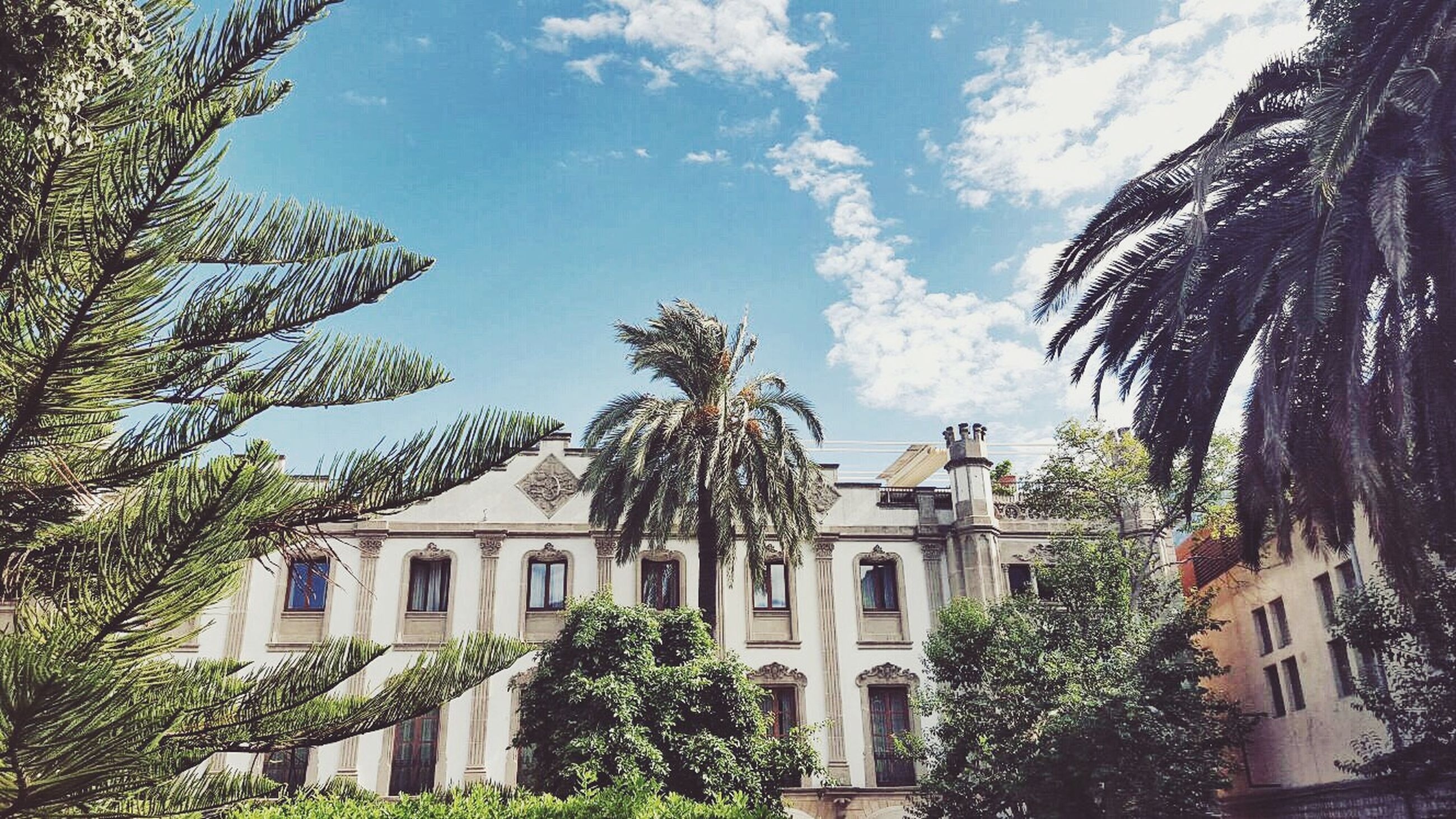 building exterior, architecture, built structure, tree, sky, low angle view, palm tree, house, residential building, growth, cloud - sky, residential structure, cloud, window, building, day, no people, sunlight, outdoors, branch