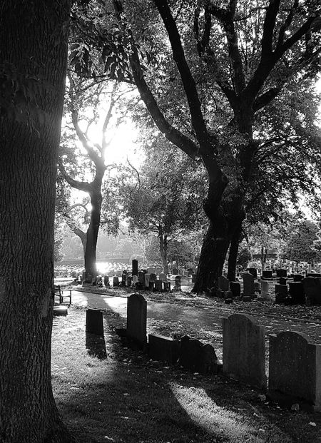 Down at the graveyard. Tree Tombstone Cemetery Outdoors Memorial No People Shadow Nature Grass Light And Shadow Light Shines Through Haze Sunny Evening ☀️ Time To Reflect Untouched Photo Untouched Scenics Beauty In Nature Tree Blackandwhitephoto