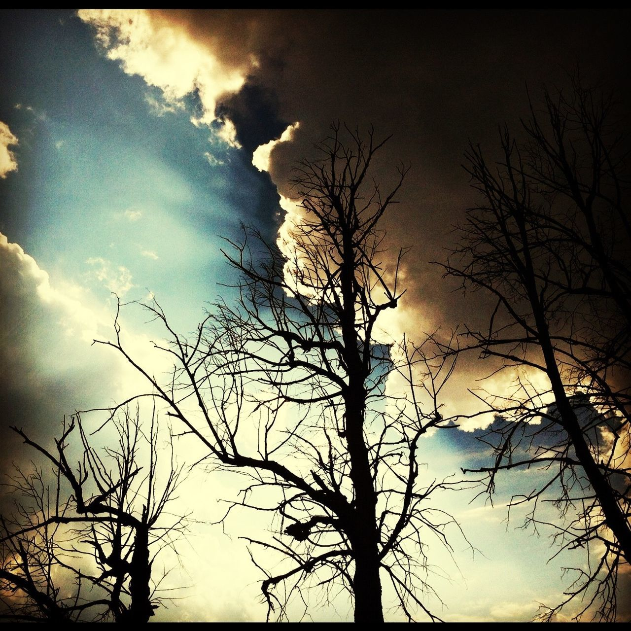bare tree, tree, silhouette, nature, branch, sky, tranquility, beauty in nature, no people, tranquil scene, outdoors, scenics, low angle view, sunset, forest fire, global warming, day, vapor trail