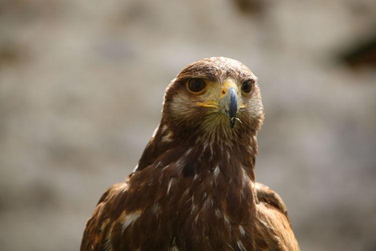 Close-Up Of Kite