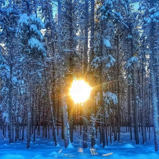 Forestbathing Wintersun Alaska Highway Cold Temperature Tree Outdoors Blue Beauty In Nature No People Backgrounds Day