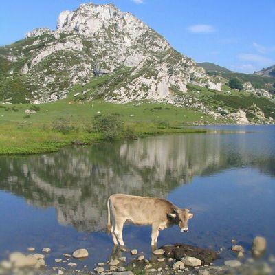 Picos de Europa, Asturias, España, Asturias , Lagoenol , Picosdeeuropa , Photoshoot , Photographer , FotoDelDia , Photoftheday , Photochallenge , Photoshop , Photowall , Photooftheday , Photooftheweek , Fotodelasemana , Fotos , Foto
