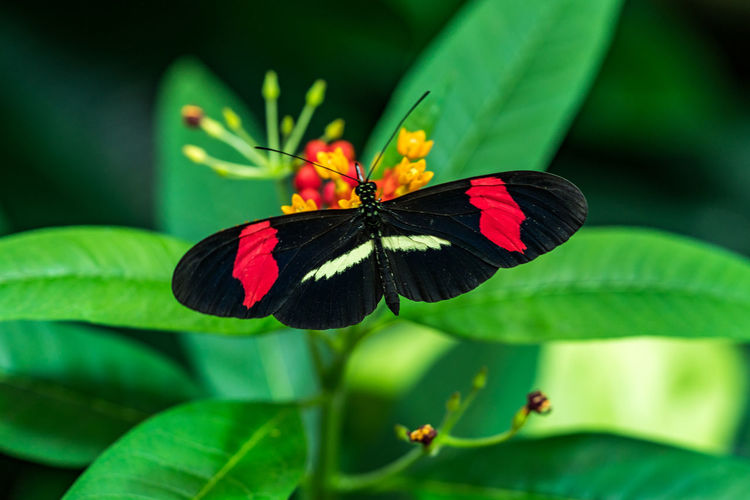 Animal Animal Themes Animal Wildlife Animal Wing Animals In The Wild Beauty In Nature Butterfly Butterfly - Insect Close-up Flower Flower Head Flowering Plant Fragility Green Color Growth Insect Invertebrate Leaf Nature No People One Animal Outdoors Plant Plant Part Pollination