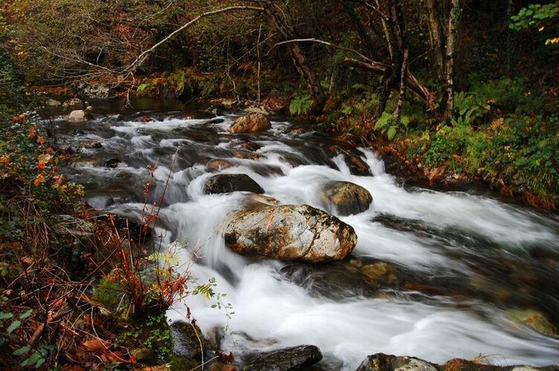 River Asturies Boal