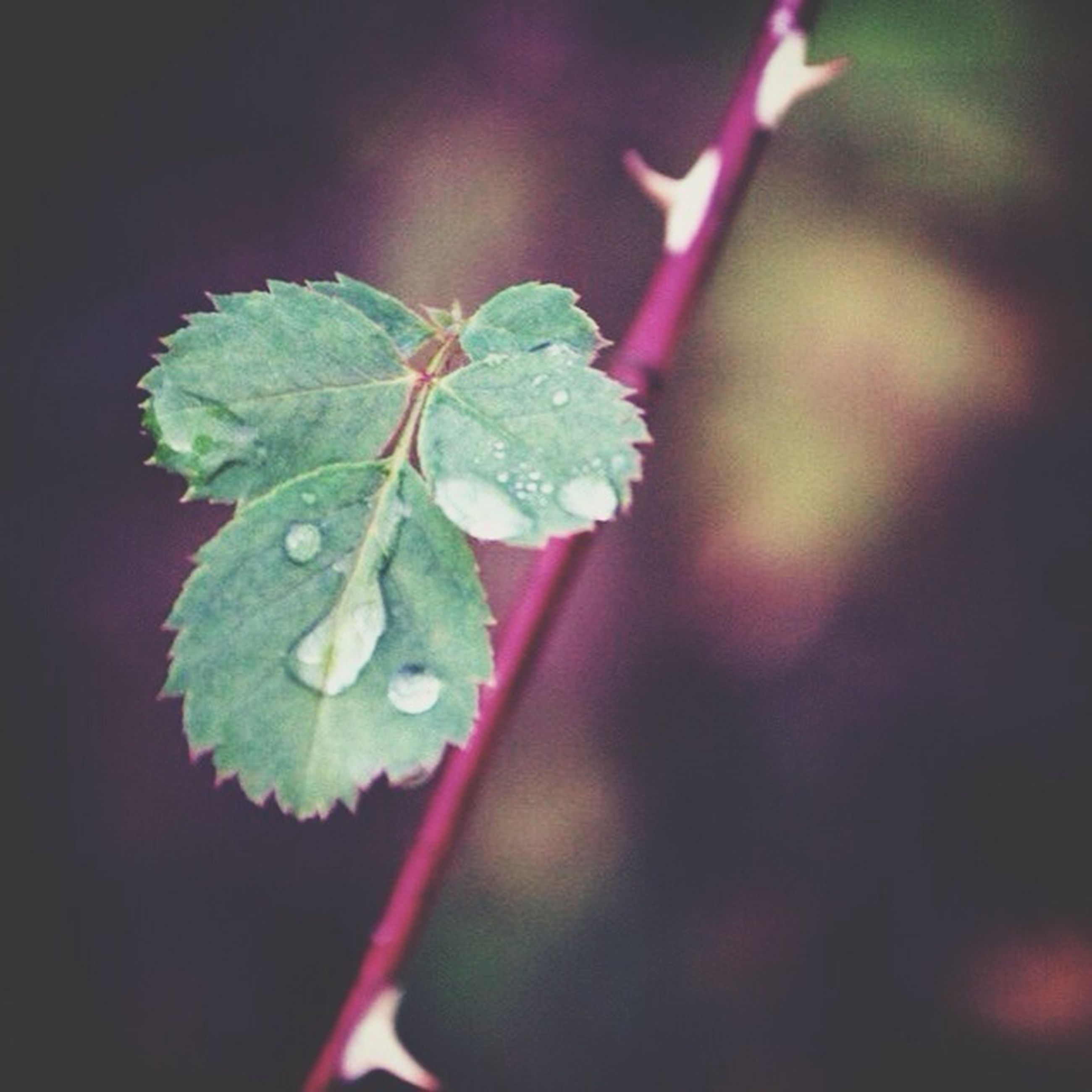 growth, drop, close-up, leaf, freshness, plant, water, wet, focus on foreground, nature, green color, beauty in nature, fragility, selective focus, dew, stem, flower, raindrop, no people, season